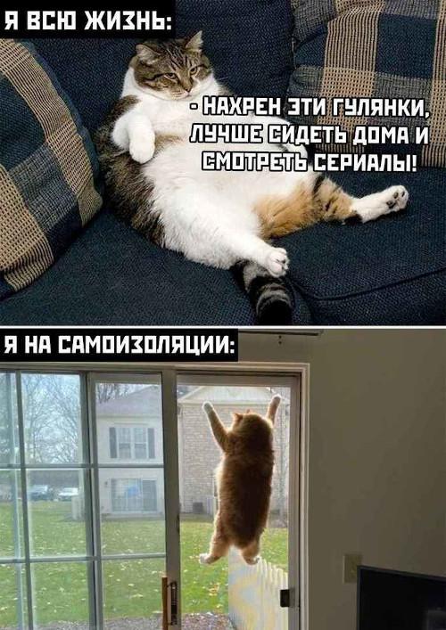 изображение: Я всю жизнь: - Нафиг эти гулянки, лучше сидеть дома и смотреть сериалы. Я на самоизоляции: #Котоматрицы