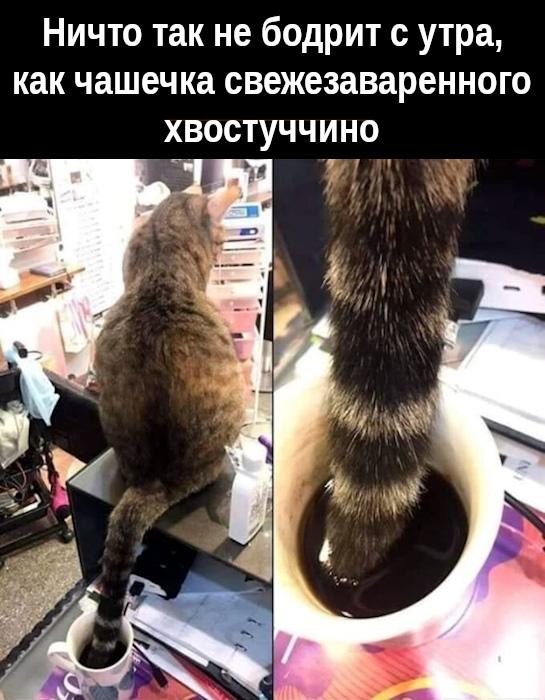 изображение: Ничто так не бодрит с утра, как чашечка свежезаваренного хвостуччино #Котоматрицы