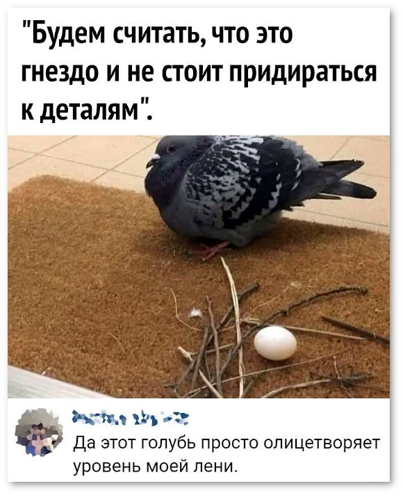 изображение: Будем считать, что это гнездо и не будем придираться к деталям. - Да этот голубь просто олицетворяет уровень моей лени. #Прикол