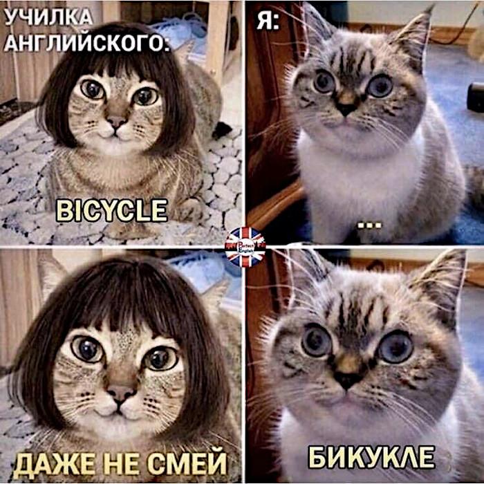 изображение: Училка английского: Bicycle. Я: ... Даже не смей! - Бикукле #Котоматрицы
