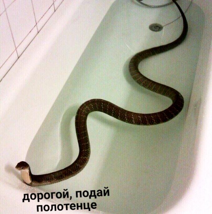 изображение: - Дорогой, подай полотенце #Прикол
