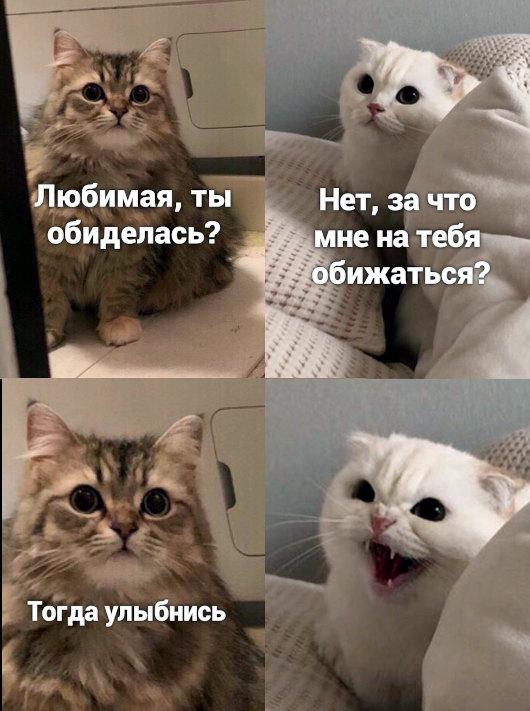 изображение: - Любимая, ты обиделась? - Нет, за что мне на тебя обижаться. - Тогда улыбнись. #Котоматрицы