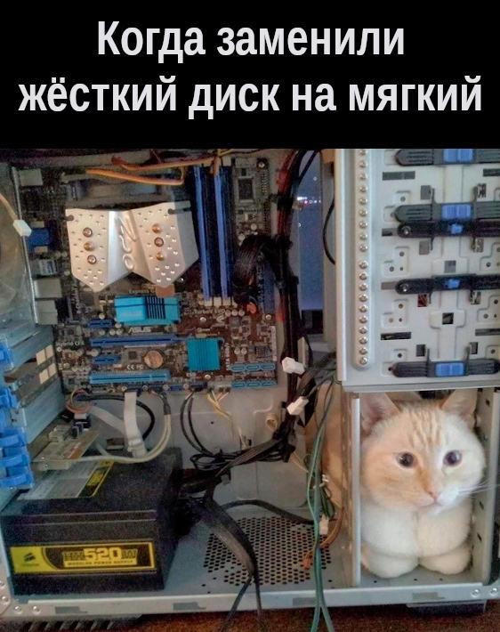 изображение: Когда заменили жёсткий диск на мягкий #Котоматрицы