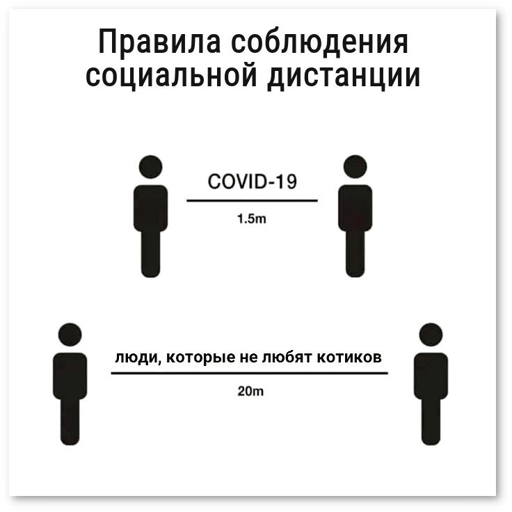 изображение: Правила соблюдения социальной дистанции. COVID-19 - 1,5 м. Люди, которые не любят котиков, - 20 м. #Прикол