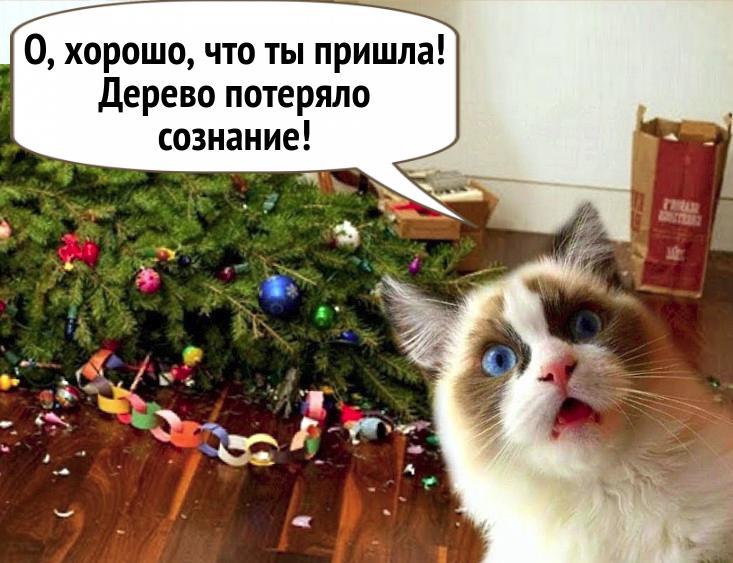 изображение: О, хорошо, что ты пришла! Дерево потеряло сознание! #Котоматрицы