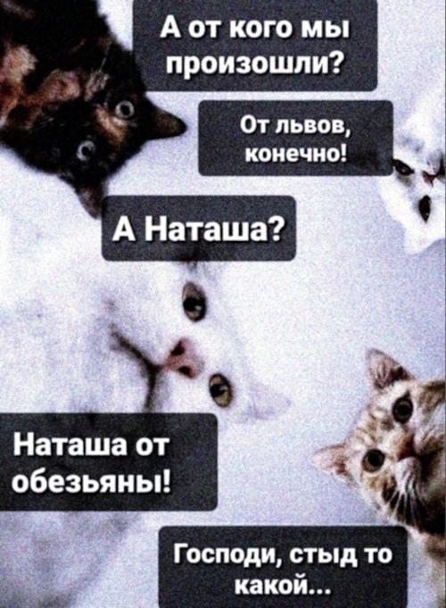 - От кого мы произошли? - От львов, конечно. - А Наташа? - Наташа от обезьяны. | #прикол