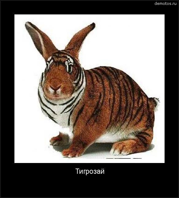 Тигрозай #демотиватор