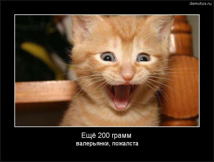 Ещё 200 грамм валерьянки, пожалста #демотиватор