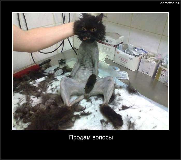 Продам волосы #демотиватор