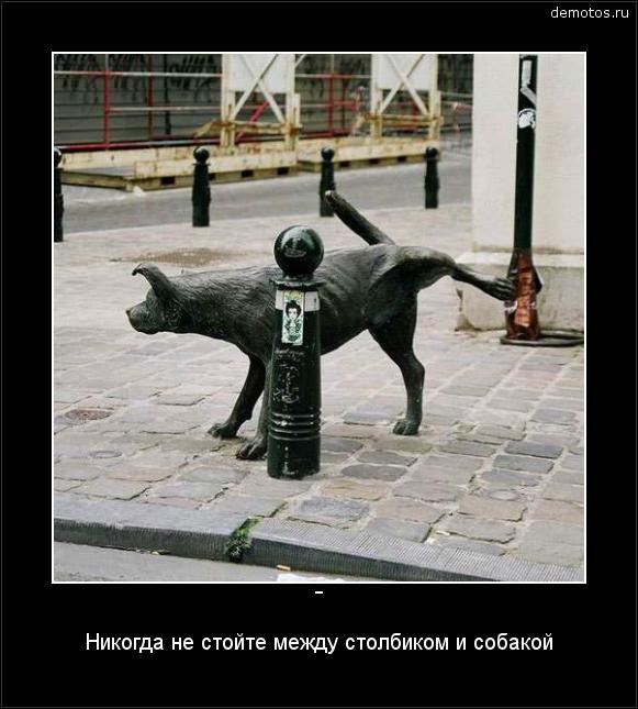 - Никогда не стойте между столбиком и собакой #демотиватор