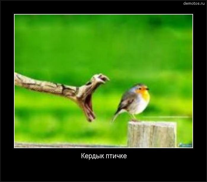 Кердык птичке #демотиватор