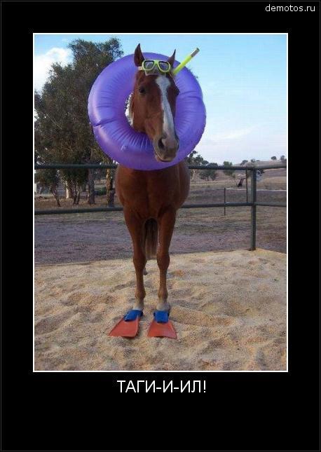 ТАГИ-И-ИЛ! #демотиватор