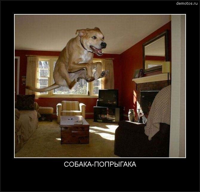 СОБАКА-ПОПРЫГАКА #демотиватор