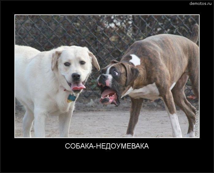 СОБАКА-НЕДОУМЕВАКА #демотиватор