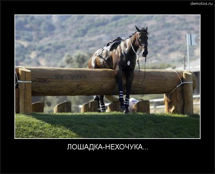 ЛОШАДКА-НЕХОЧУКА... #демотиватор