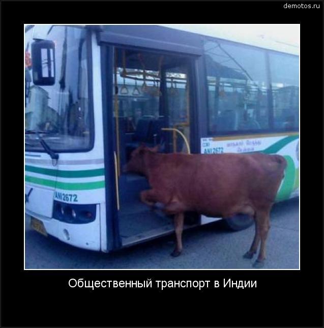 Общественный транспорт в Индии #демотиватор