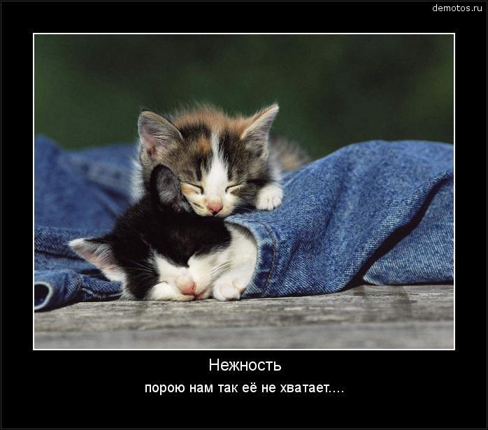 Нежность порою нам так её не хватает.... #демотиватор
