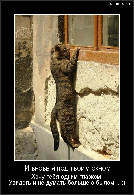 И вновь я под твоим окном Хочу тебя одним глазком Увидеть и не думать больше о былом... :) #демотиватор