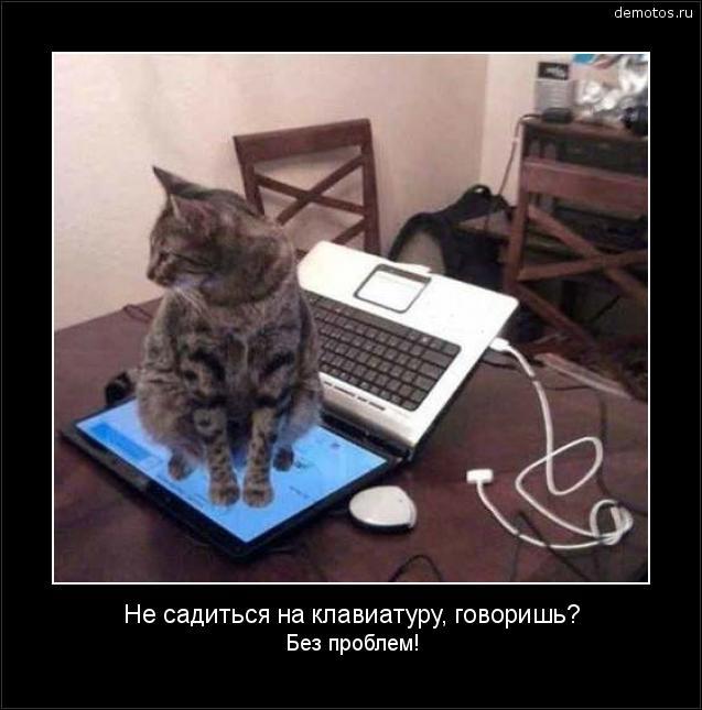 Не садиться на клавиатуру, говоришь? Без проблем! #демотиватор