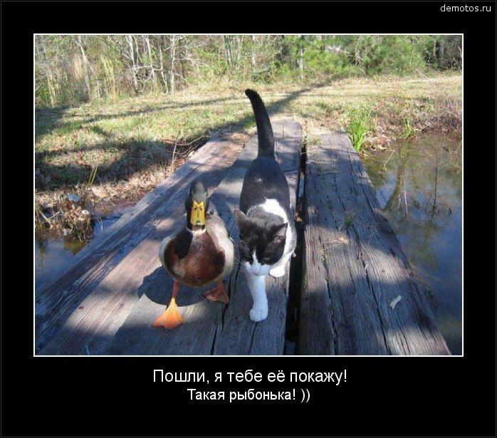Пошли, я тебе её покажу! Такая рыбонька! )) #демотиватор
