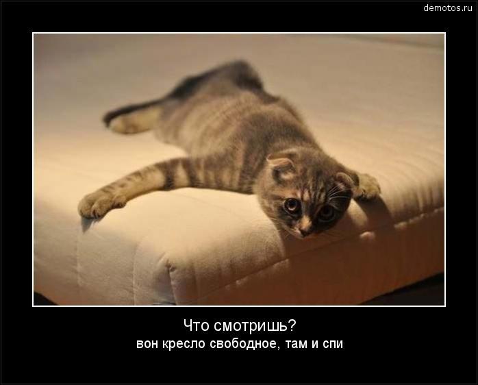 Что смотришь? вон кресло свободное, там и спи #демотиватор