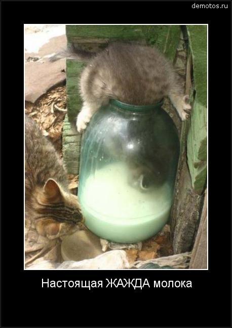 Настоящая ЖАЖДА молока #демотиватор