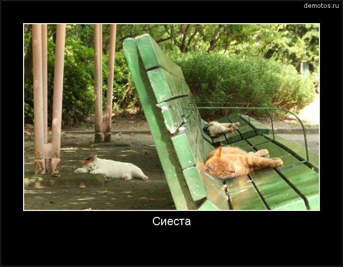 Сиеста #демотиватор