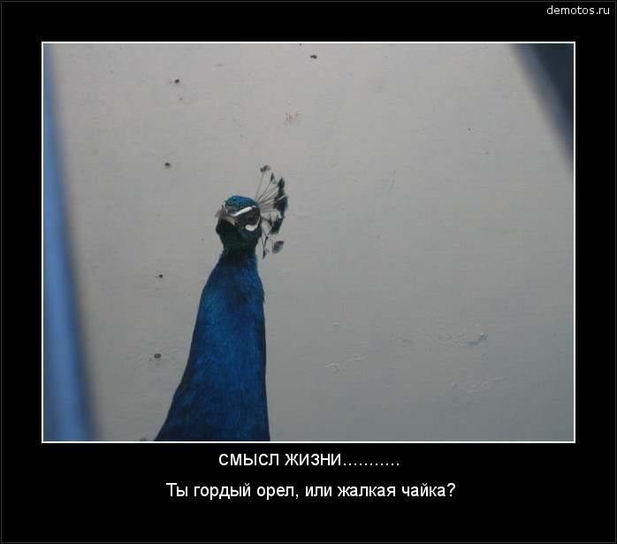 смысл жизни........... Ты гордый орел, или жалкая чайка? #демотиватор