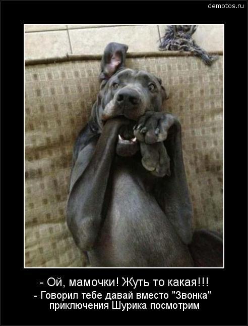 """- Ой, мамочки! Жуть то какая!!! - Говорил тебе давай вместо """"Звонка"""" приключения Шурика посмотрим #демотиватор"""