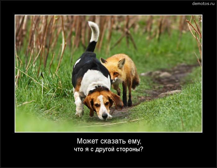Может сказать ему, что я с другой стороны? #демотиватор