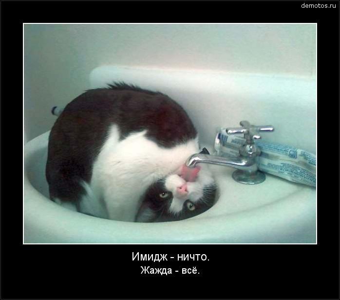 Имидж - ничто. Жажда - всё. #демотиватор