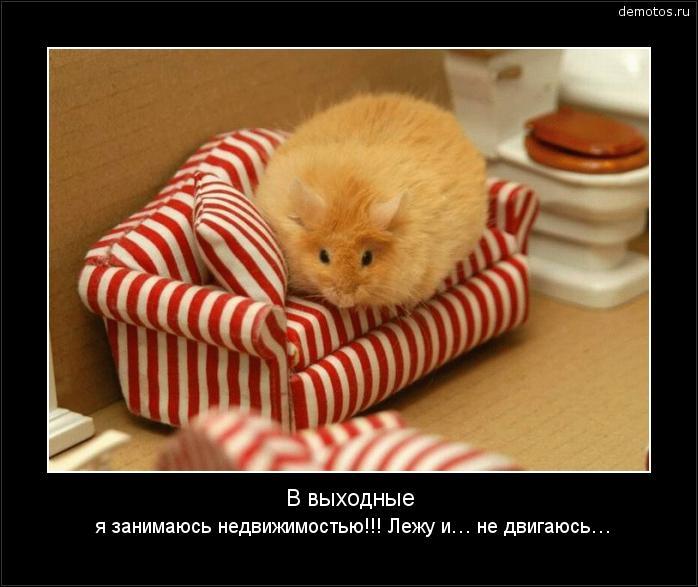 В выходные я занимаюсь недвижимостью!!! Лежу и… не двигаюсь… #демотиватор