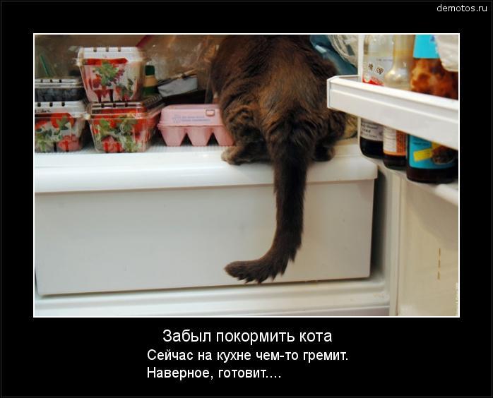 Забыл покормить кота Сейчас на кухне чем-то гремит. Наверное, готовит.... #демотиватор