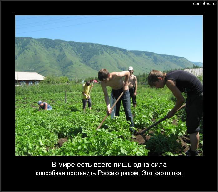 В мире есть всего лишь одна сила способная поставить Россию раком! Это картошка. #демотиватор