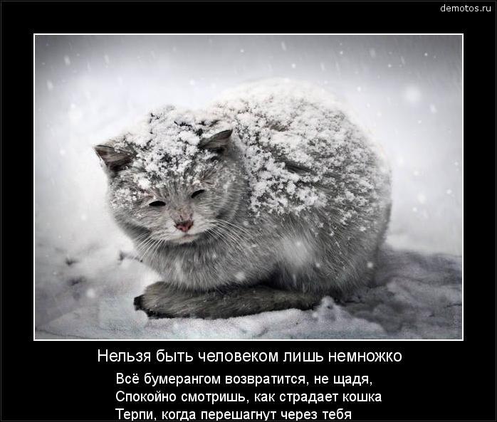 Нельзя быть человеком лишь немножко Всё бумерангом возвратится, не щадя, Спокойно смотришь, как страдает кошка Терпи, когда перешагнут через тебя #демотиватор