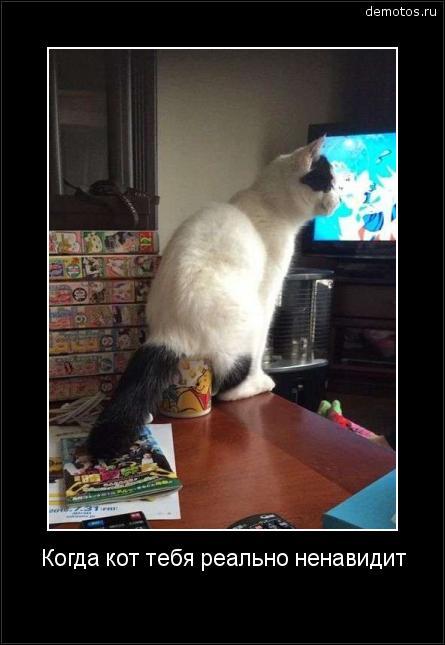Когда кот тебя реально ненавидит #демотиватор
