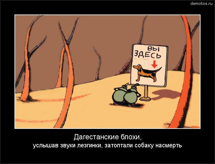 Дагестанские блохи, услышав звуки лезгинки, затоптали собаку насмерть #демотиватор