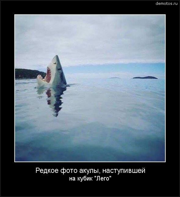 Редкое фото акулы, наступившей на кубик